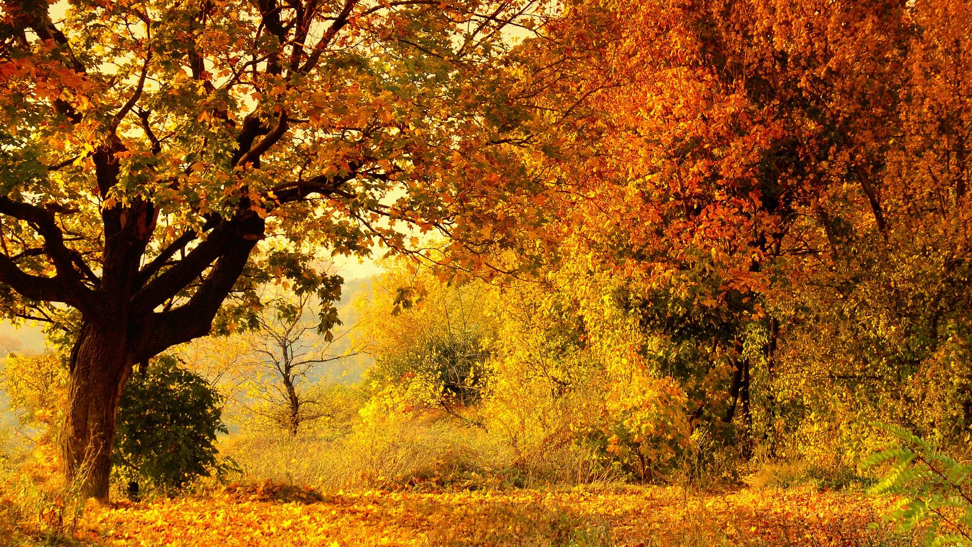 Doce experiencias que no hay que perderse en Francia al comenzar el otoño